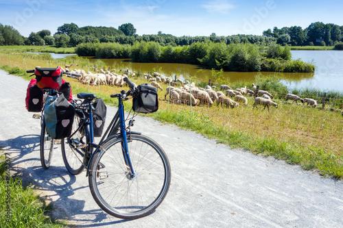 Fahrrad mit Gepäck und Schafe, EmsRadweg, Steinhorster Becken, Deutschland