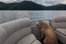 Doggie Boat Ride 2