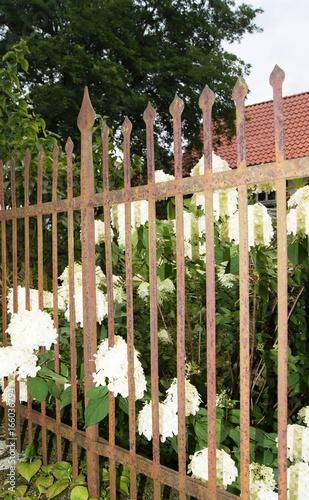 Alter Metallzaun Fence Holzzaun Garden Holz Green Holzern Weiss