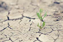Green Sprout With Dry Cracked Earth