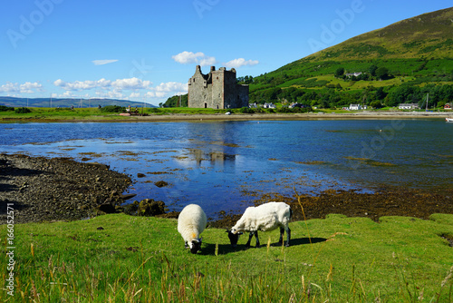 Photo Traditional Scottish landscape with sheep grazing in front of the Lochranza Cast
