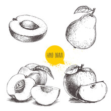 Hand Drawn Sketch Style Fruits...