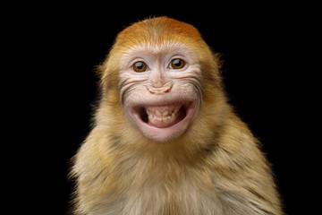 Randki arktycznych małp