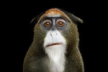 Close-up Portrait Of Funny De ...