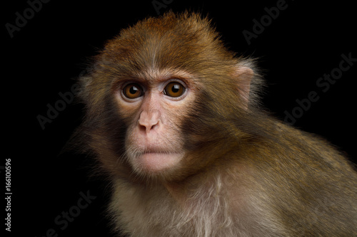 Foto op Aluminium Aap Portriat of Japanese macaque Isolated on Black Background