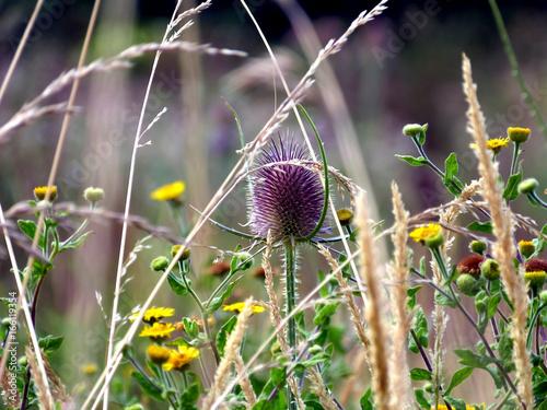 Fotografía  Fleurs de garrigue