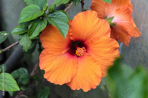 Foto auf Leinwand Blumenhändler Bloemen en planten in Vlindertuin De Passiflorahoeve in Harskamp