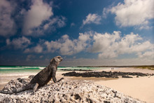 The Beach In The Galapagos Isl...
