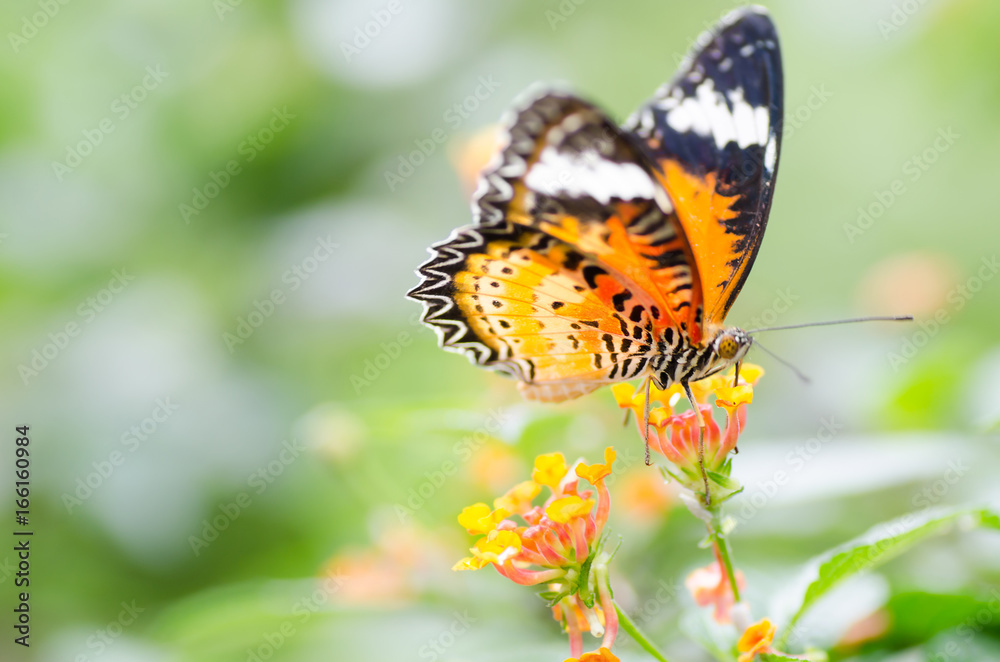 Beautiful butterfly is pollinating on flowers