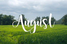 August Text On Tropical Field ...