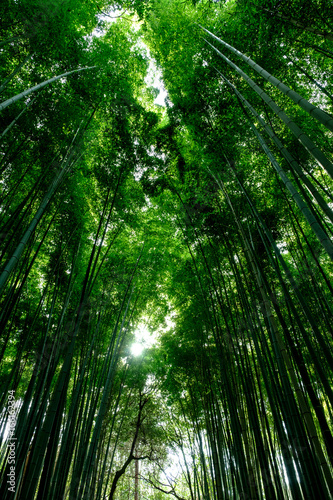 Recess Fitting Bamboo Bamboo forest background
