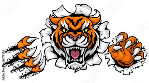 Tiger Background Claws Breakthrough Kup Tę Grafikę