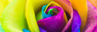 canvas print picture - Bunte Rose in Regenbogenfarben, Banner