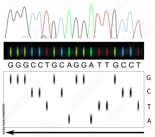 Principle of DNA sequencing Canvas-taulu