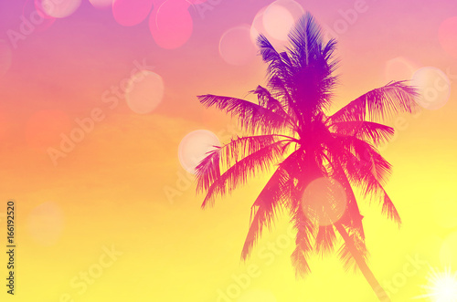 Spoed Foto op Canvas Oceanië Copy space of tropical palm tree with sun light on sky background.