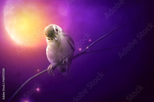 Bird is sitting on the tree branch in the moon light Wallpaper Mural