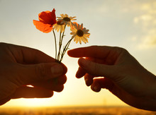 Hand Gives A Flowers With Love At Sunset. Romantic Concept.