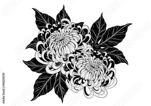 Chrysanthemum vector on white background Fototapete