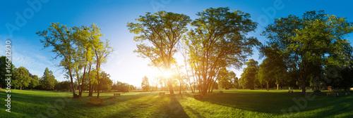 Cadres-photo bureau Miel Sunlight through the trunks of trees. Morning in the summer park