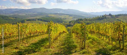 Foto  Tuscany vineyards, Chianti region, Italy