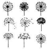 Fototapeta Dmuchawce - Set of doodle dandelions. Decorative Elements for design, dandelions flowers blooming.