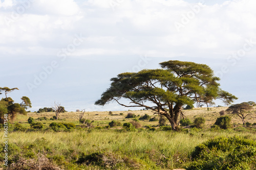 Landscapes of savanna of Amboseli. Kenya, Africa Canvas Print