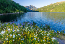 Colorful Flowers: Chamomile, Lupine, Foxglove On The Shore Of A Blue Lake. Birth Of A Lake Trail. Mount St Helens National Park, South Cascades In Washington State, USA