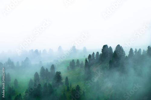 Fotografía  Nebbia che avvolge alberi in un paesaggio di montagna