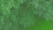Aerial view of trees in rainy day. Slow motion