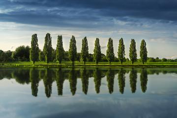 Obraz 10 junge Bäume