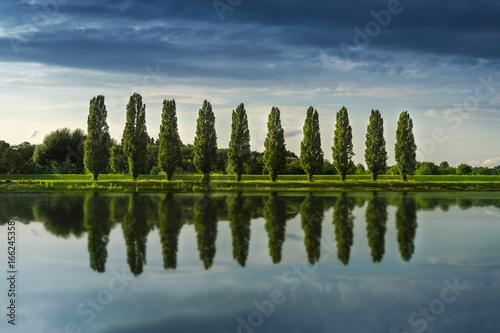10 junge Bäume - 166245358