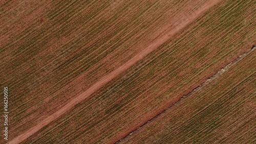 Fotografija  Flying Over Sugar Cane Field in Sao Paulo, Brazil