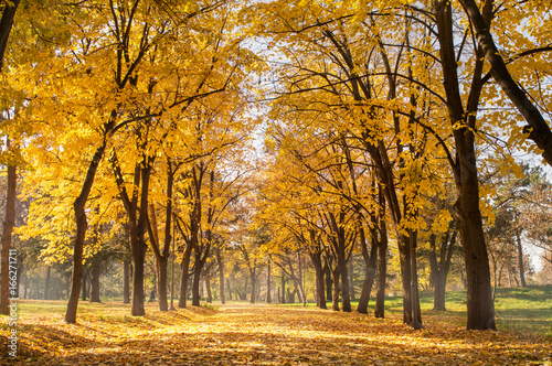 Autumn park scene of a path in fallen leaves