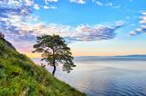 Lonely pine on green slope of west coast Lake Baikal