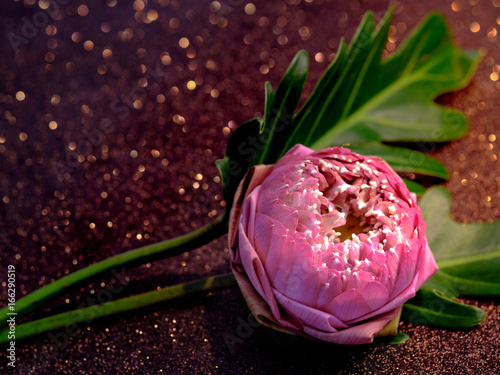 Pink Water Lily Or Lotus Flower Folding Thai Style With Red Bokeh
