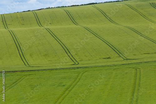 Türaufkleber UFO 蒼い麦の風景 Scenery with wheat field