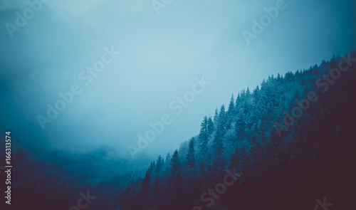 photo depicting a backdrop foggy mystic pine tree woods in the