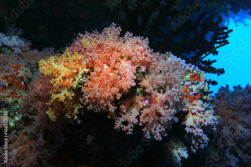 Fotobehang Onder water Beautiful coral reef