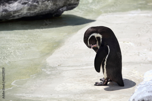 Penguin looking sad and lonely