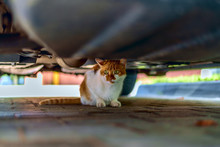 Red Cat Under The Car