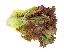 Red Leaf Lettuce With A Rubber...