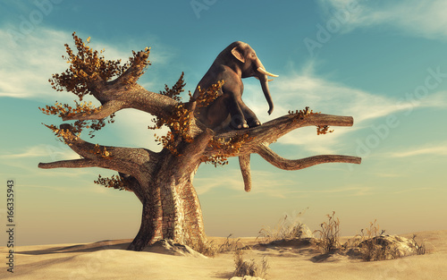 Fotografiet Elephant in a dry tree