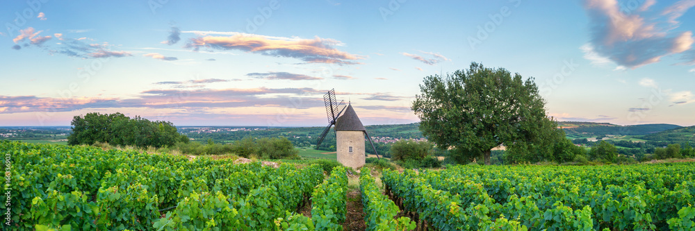 Fototapety, obrazy: Panorama of Vineyard with Windmill - Santenay, France