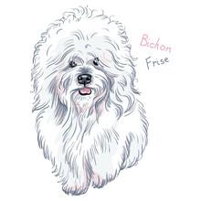 White Cute Dog Bichon Frise Br...