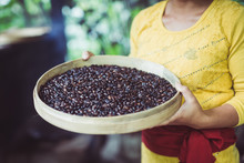 Woman Working On Roasting Coffee Beans