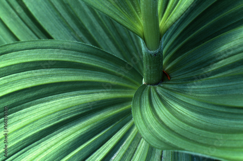 closeup macro of spiral patterns in ribbed leaf