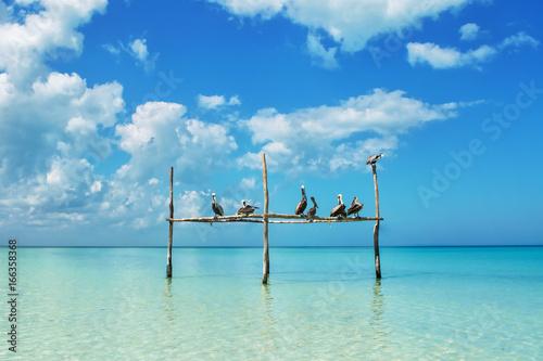 Fotografie, Obraz  Pelicans at Isla Holbox
