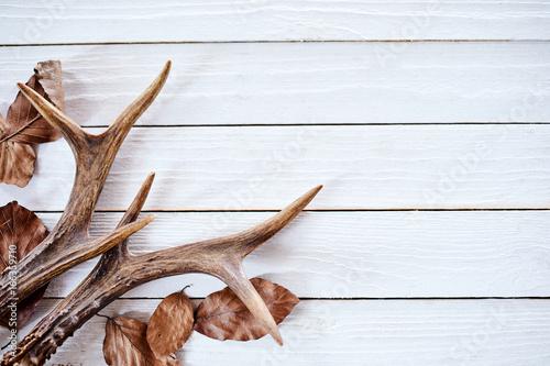 Seasonal winter antlers and leaves on wood Fototapete