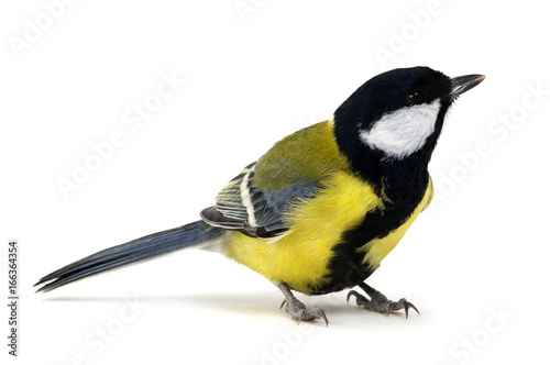 Deurstickers Vogel great tit, Parus major