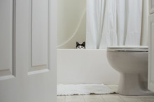Black And White Cat Hides In The Bathroom Tub